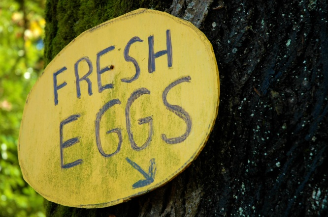 organic farm fresh eggs